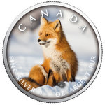 5 $ Dollar Trails of Wildlife - Red Fox Rotfuchs Maple Leaf Farbe farbig 1 oz Silber Kanada 2019 **